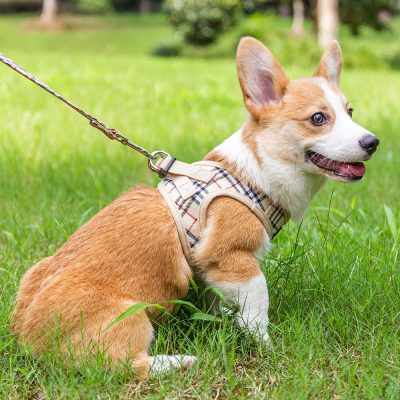 Best harness for small dogs