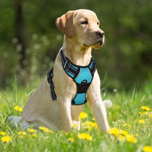 best no pull dog harnesses