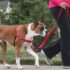 Easy Walk Harness For Dogs : <br>A Complete Guide