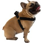 different Types of Dog harness step in