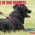 Different Types of Dog Harnesses : <br>A Complete Guide